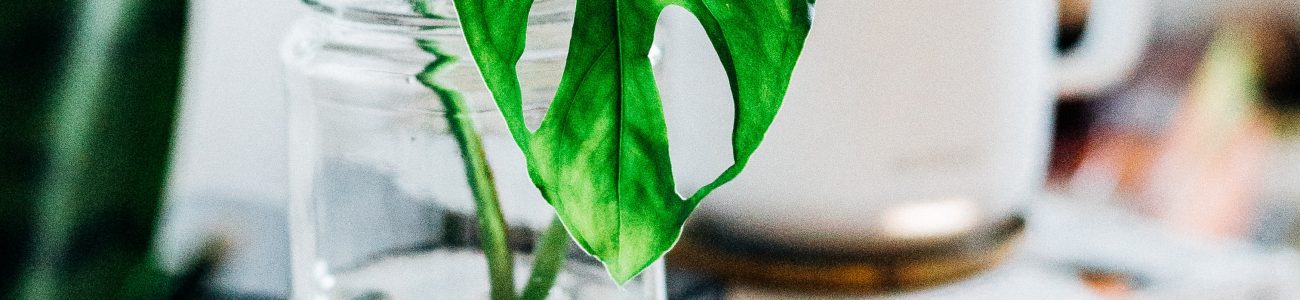 How to Propagate your Plants (in Water)